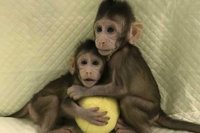 Bilim Adamları Primatları İlk Kez Klonladı