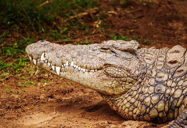 Hayvanlar Neden Habitattan Uzaklaşıyor?